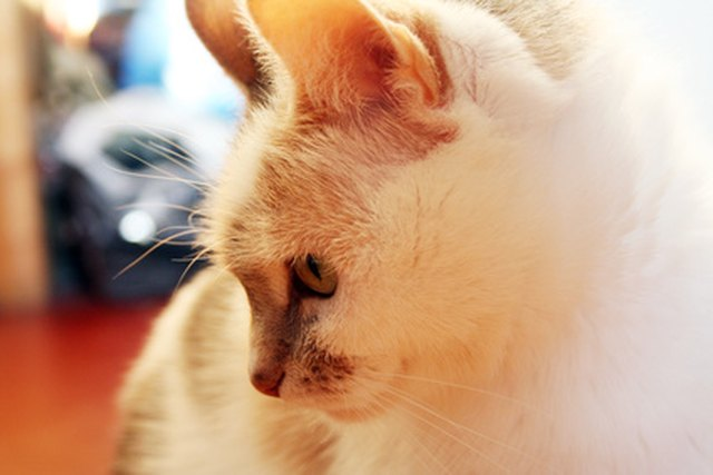 When urine smell lingers, cats may return to previous accident spots to urinate again.