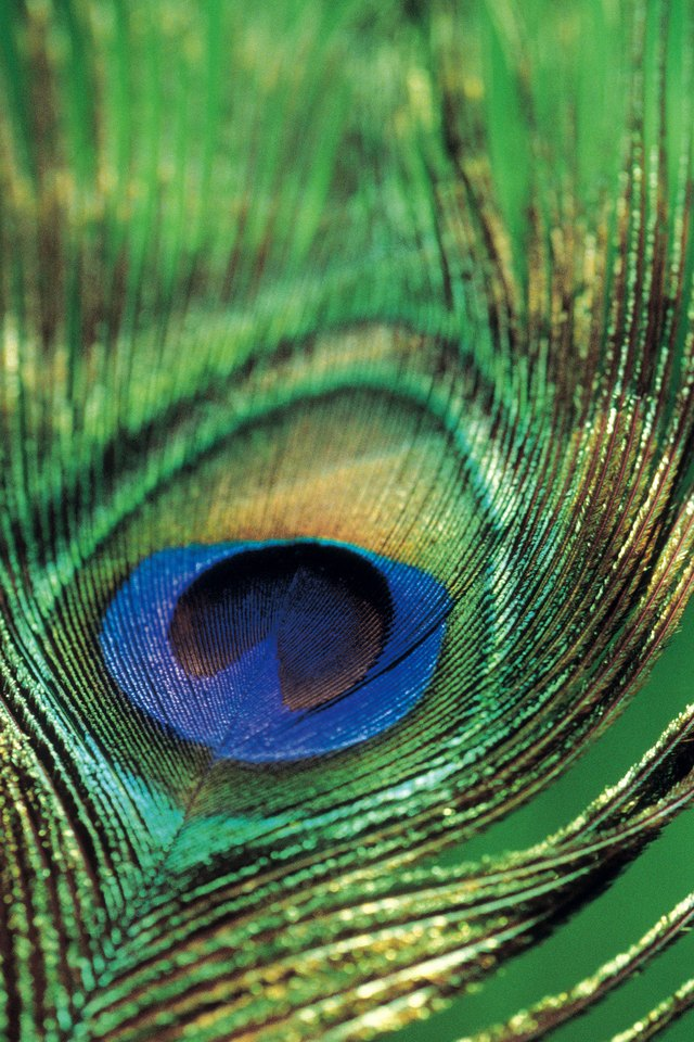 How to make a peacock feather out of construction paper — photo 2