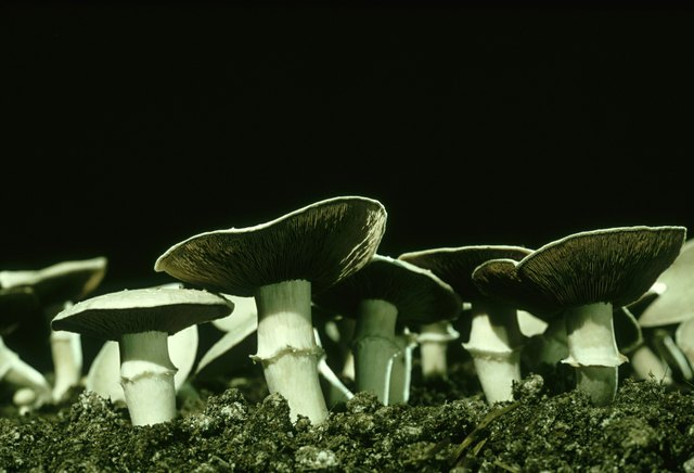 How to Build a Mushroom Fruiting Chamber | eHow