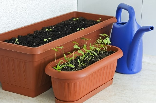 Start balcony edibles from seed or opt for starter plants.