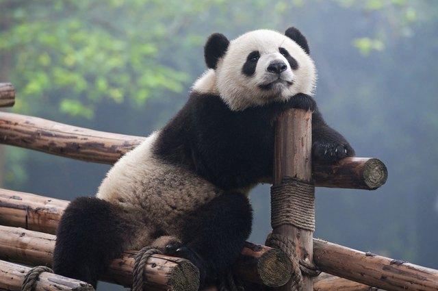 How to Make a Panda Costume | eHow