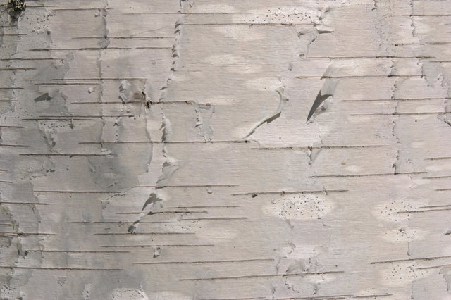 Birch Bark Lends Texture Beauty And A Rustic Look To Craft Items Home Decor