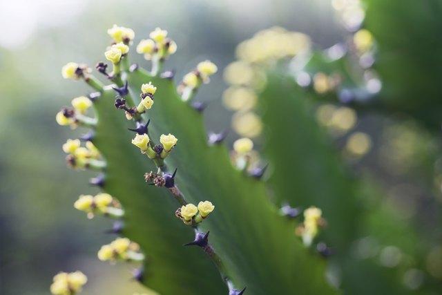 Un primer plano de flores amarillas en una planta de cactus.