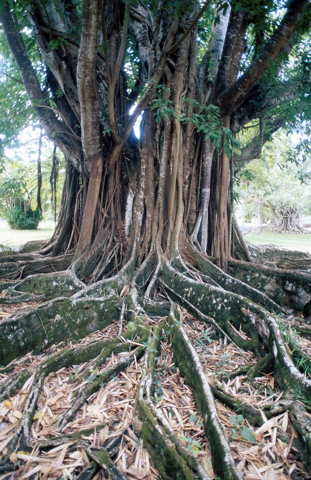 Tree roots can cause problems when they grow where they aren't wanted.