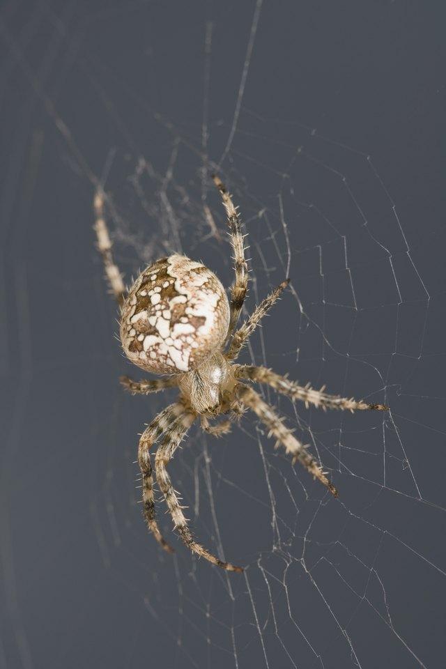 Natural Homemade Spider Pesticide For Inside The Home Ehow