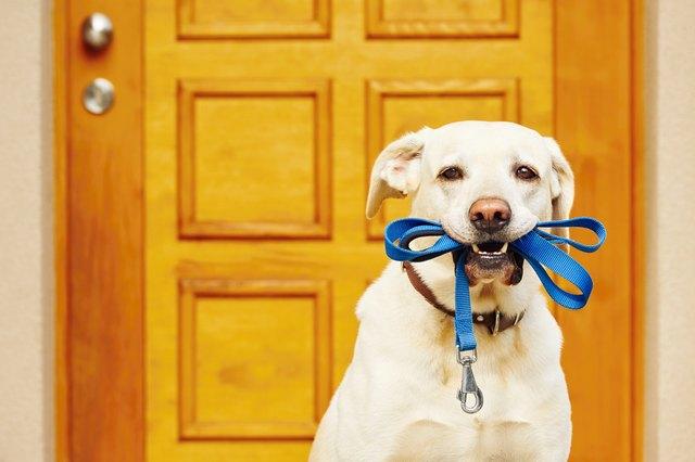 Dog with leash