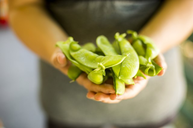 Caucasian woman holding fresh snap peas