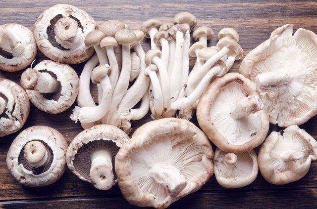 Edible mushrooms on wood table, raw food.