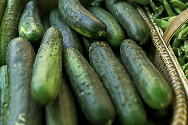 A basket of cucumbers on display at the local farmers market.