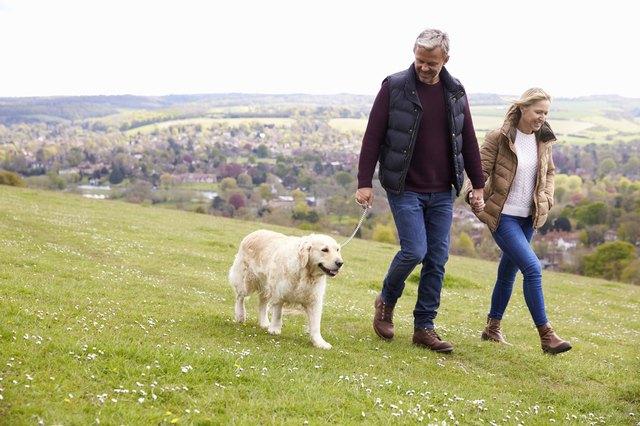 Mature Couple Taking Golden Retriever For Walk