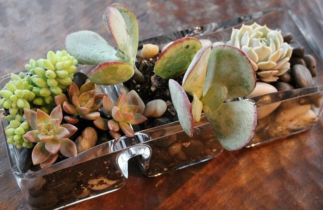 How to create a table top succulent garden