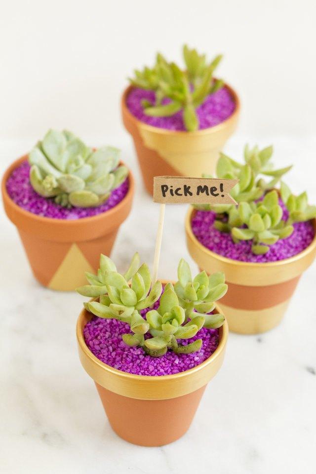 Succulent planters.