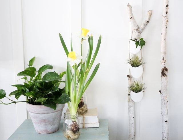 Create Hanging Plant Holders