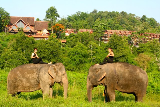 Elephant yoga