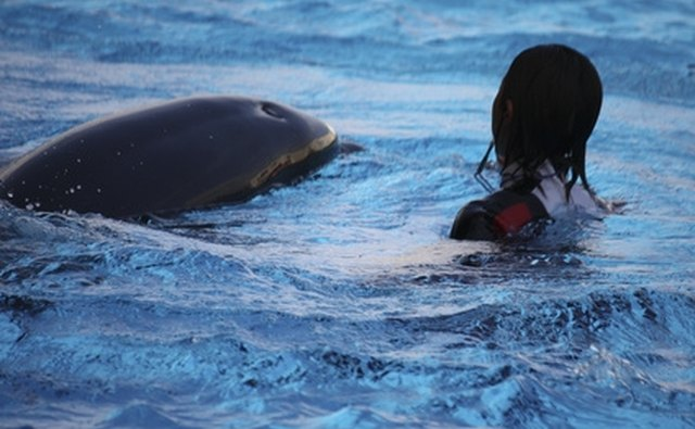 Dolphins seem to enjoy interactions with humans.