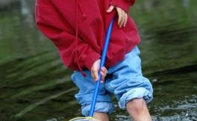 Trapping minnows yourself can yield larger minnows than bait shops offer.