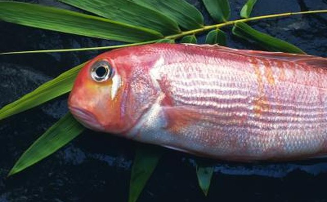 Tilefish on bamboo leafe