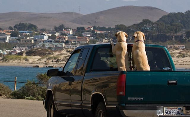 If this was a crew cab pickup the dogs would be inside.