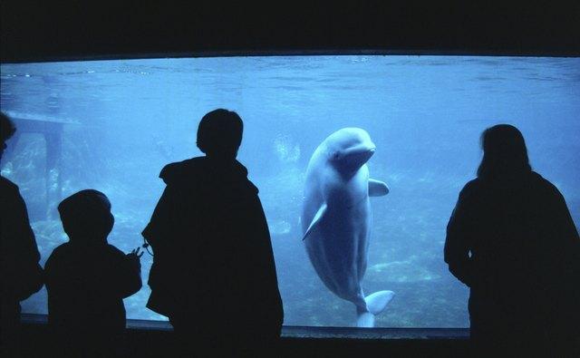 Aquariums often have a calming effect on children.