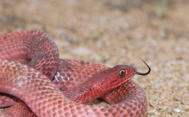 Texas law protects 13 species of snake.