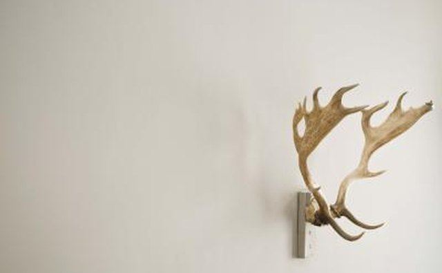 anters mounted on wall