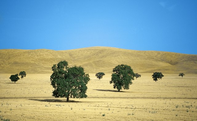 USA, California, Merced County, Highway 140, Trees on a grassland