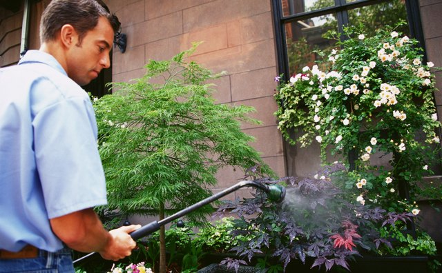 Gardener watering bushes