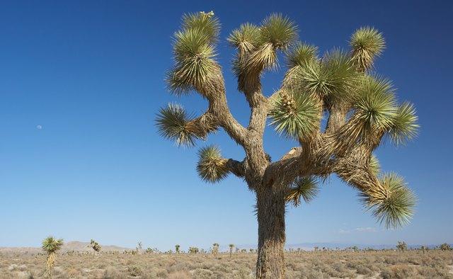 Joshua Tree National Park, Mohave Desert, California