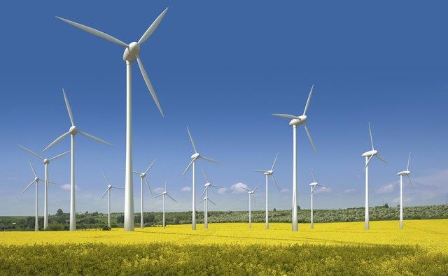 Wind turbines in a rapeseed field