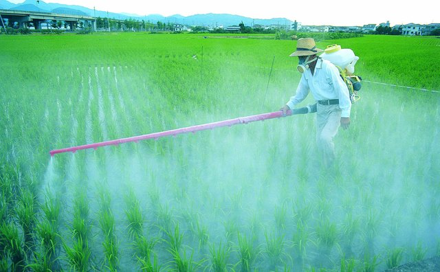 Spraying chemicals on rice crop,Japan