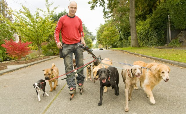 Man on rollerblades walking dogs