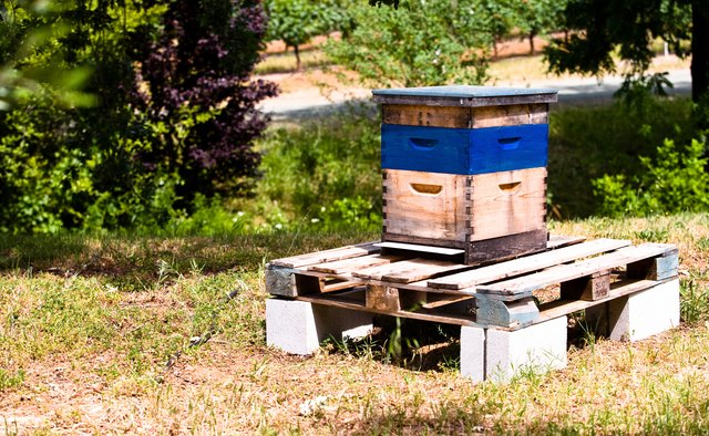Hive with blue stripe