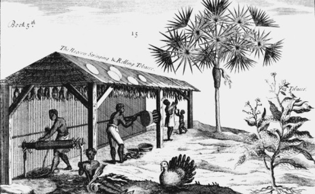 Slaves in the southern U.S. raised tobacco, which grew well in the humid subtropics there.