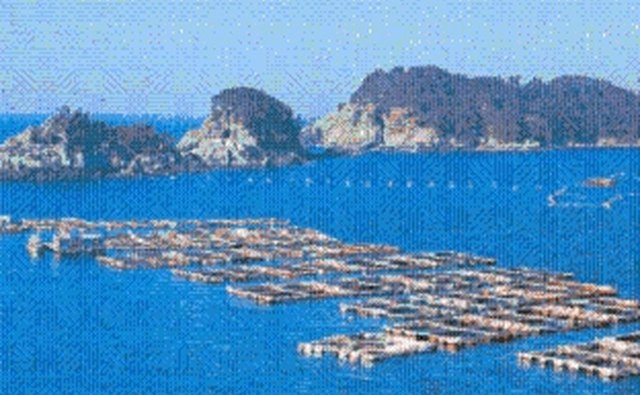 Large fish cage farms are created by using multiple cages