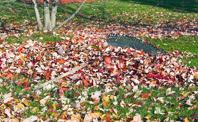 Rake leaves and shape up your yard to enhance curb appeal.