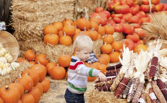 A toddler is walking around at a fall festival.