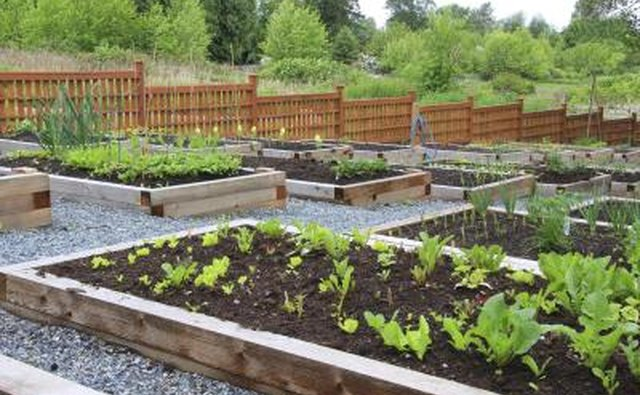 Raised vegetable beds in a community garden.