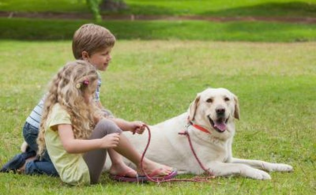 Working with pets is helpful for shy 12-year-olds.