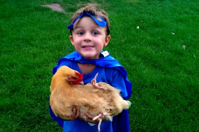 The 4 Parental Perks of Owning Chickens… Really