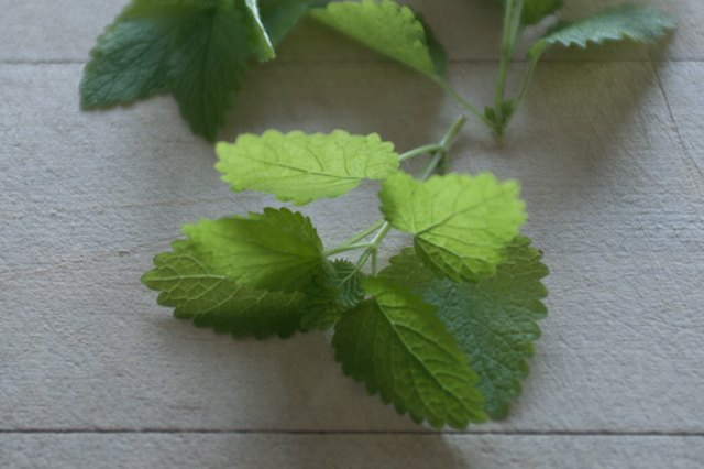 Fresh Ideas: Lemon Balm