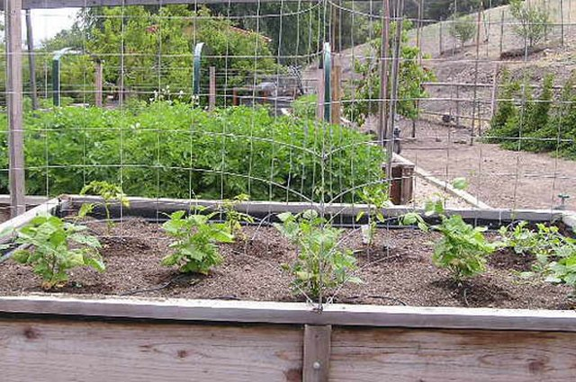 Cultivating a Family-Friendly Vegetable Garden