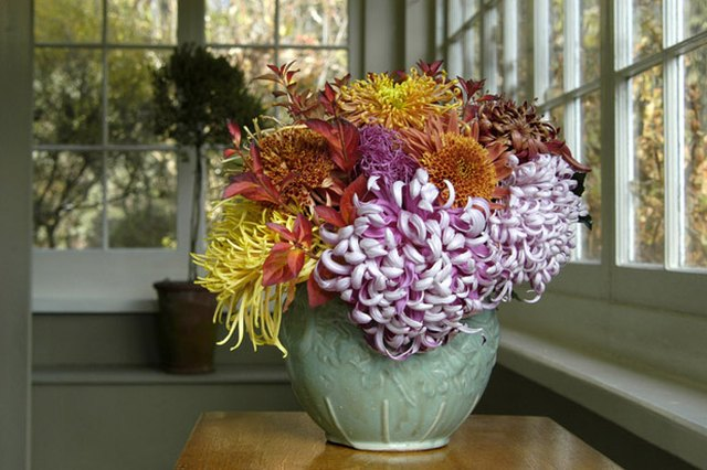 Rediscovering the Culture of Fancy Chrysanthemums