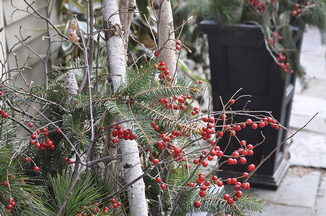 How to Decorate for the Holidays on the Cheap With Garden Greens