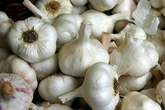 How to Use Garlic as an Antibiotic | LEAFtv