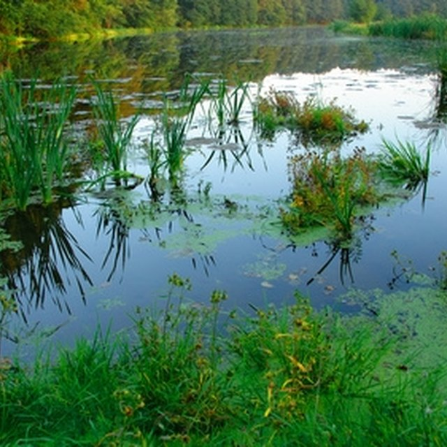 Regulations for Building Ponds in Pennsylvania