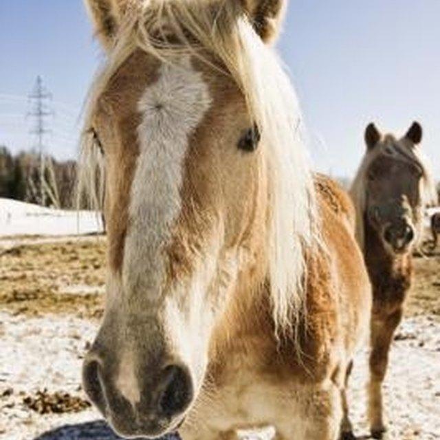 Speech Topics About Horses