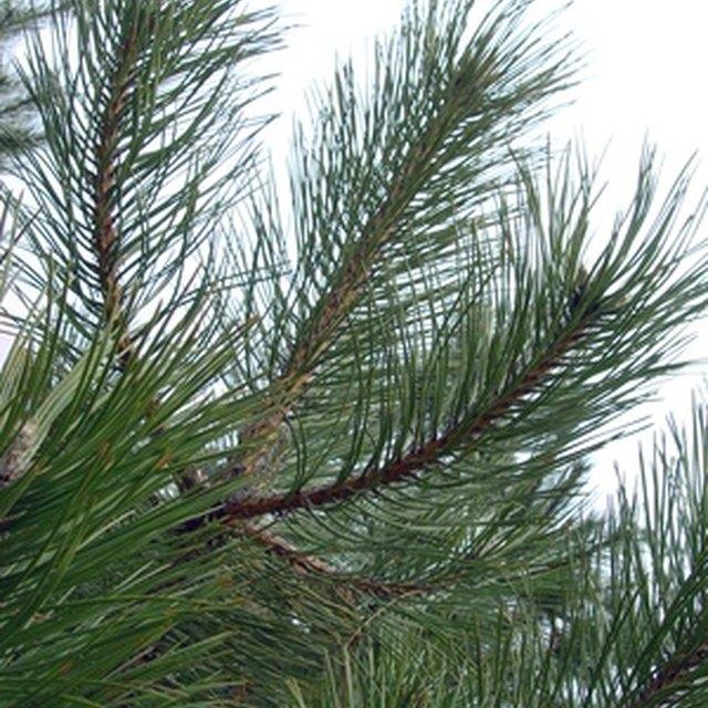 How to Start a Christmas Tree Farm & Its Tax Implications