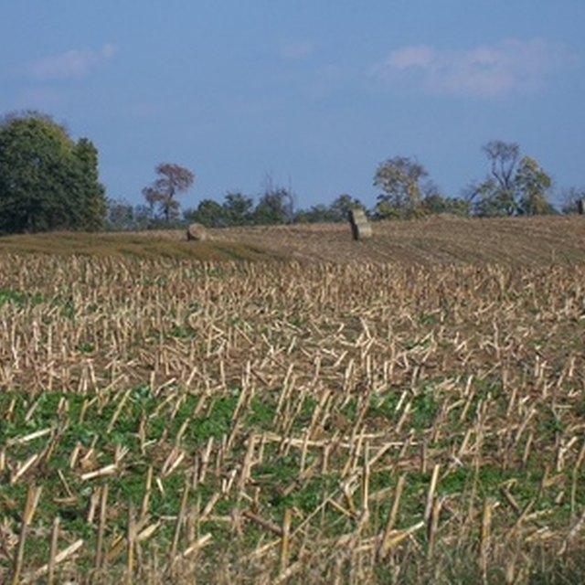 List of Amish Survival Foods