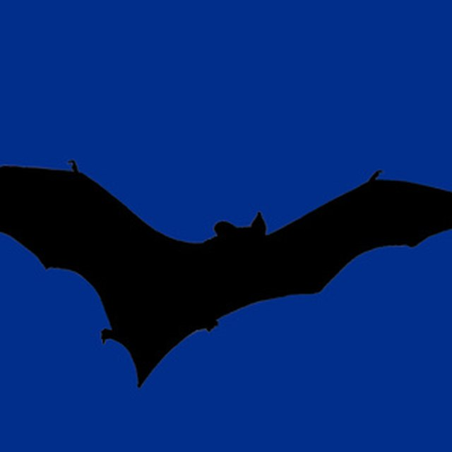 How To Get Rid Of Bats In Barns