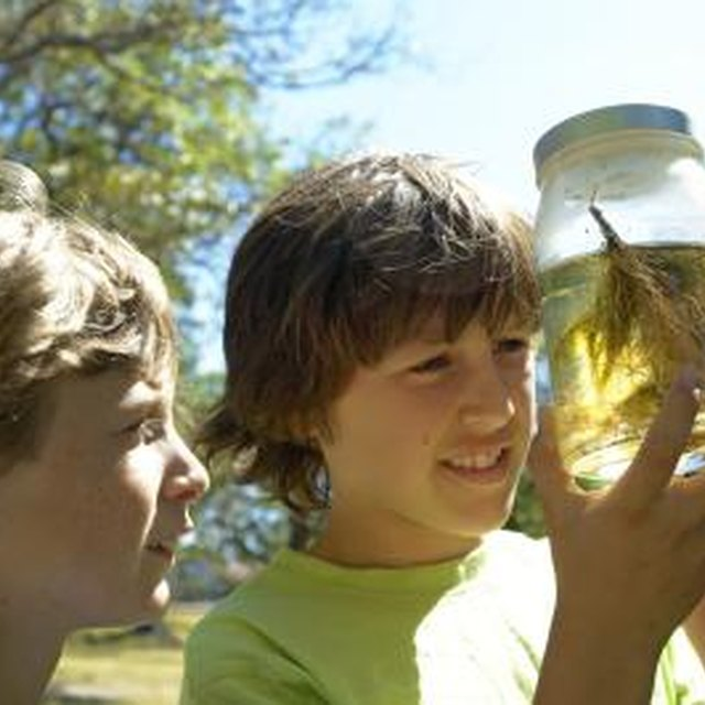 Six-Step Scientific Method for Elementary Kids